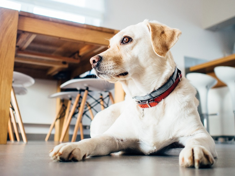 content_animal-dog-pet-indoors2.jpg